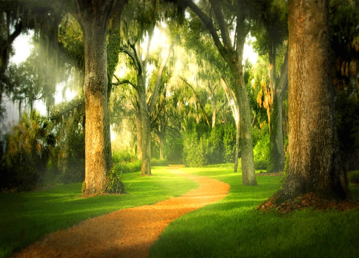 lifes-path