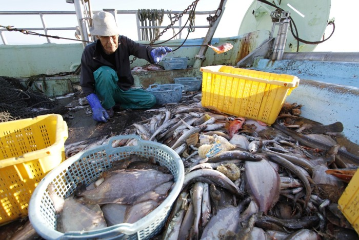 A fisherman sorts out fish he caught in the waters off Iwaka, 25 miles south of Fukushima.